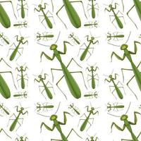 Praying mantis on seamless background
