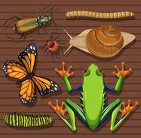 Set of different insects on wooden background