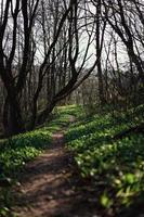 Mountain biking path