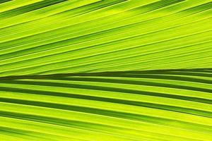 Green leaf pattern background