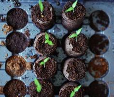 propagar plántulas en el suelo