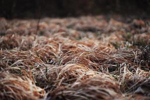 Brown grass in the garden
