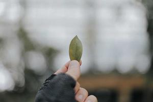 persona con hoja verde