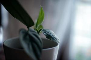 planta con gotas de agua foto