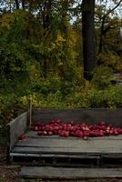 Red apples in a brown wooden crate