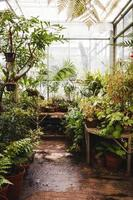 Bristol, UK, 2020 - Plants in a glass greenhouse