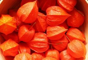 Orange tree nuts