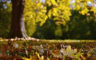 Fallen leaves in park during autumn