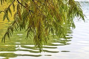 ramas de los árboles sobre el agua del lago en otoño