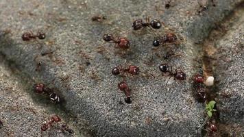 hormigas en el trabajo