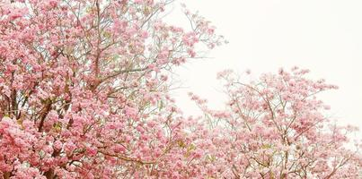 Pink flower trees background