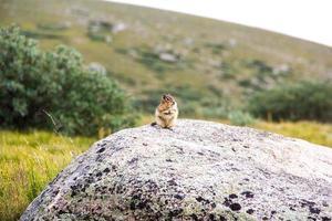Linda marmota de pie sobre una roca en la montaña y los campos foto
