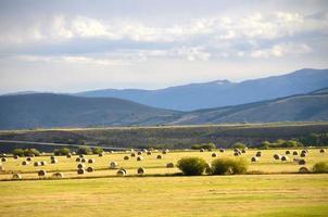 Colorado Hay Field photo