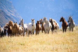 herd of horses photo