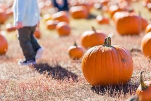Pumpkin patch photo