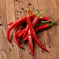 chili pepper photo