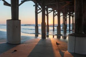 Pidgeon under Pier