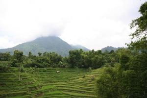 Indonesian countryside photo