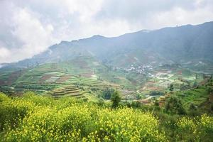 Dieng Plateau  in  Central Java photo