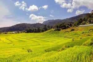 Campo de arroz verde en terrazas en mae klang luang