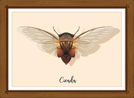 Cicada on wooden frame