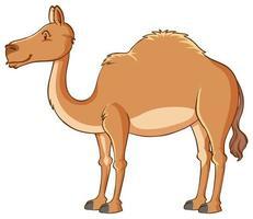 camello aislado sobre fondo blanco vector