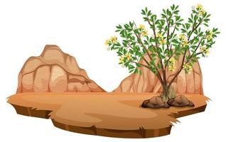 Creosote bush plant in wild desert