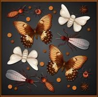 Set of different insects in wooden frame