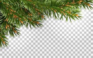 Fir tree frame isolated