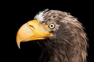 Eagle bird photo