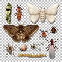 Set of different insects isolated