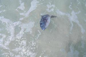 Peces muertos en el agua en la playa.