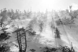 Windswept Snowfield photo