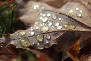 Rain Drop photo