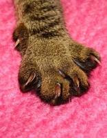 Cat paw and talons