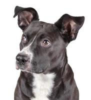 black cute dog photo