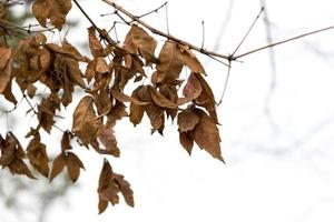 hermosas hojas rojas