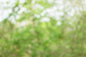 Defocused nature background