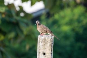 Pigeon perched on power pole