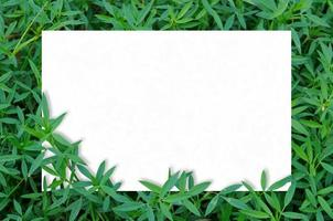 Card mockup in green leaves