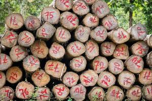 troncos de madera de teca dorada