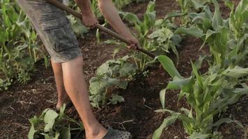 controle de ervas daninhas em fazenda orgânica