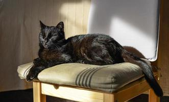cat on the chair photo