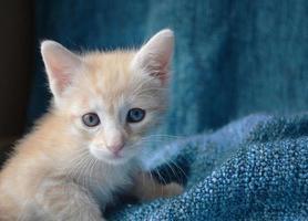 Cute kitten, side of frame