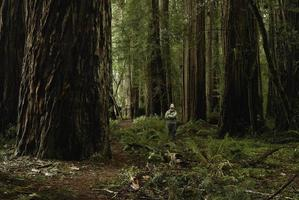Standing in the Redwoods photo