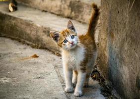gatito rojo foto