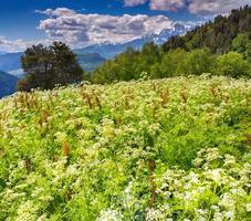 prados alpinos en flor en las montañas del Cáucaso