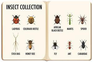 conjunto de colección de insectos en el libro.