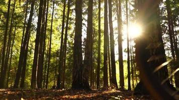 Paar auf Fahrrädern im sonnigen Wald, beleuchtetes Zeitlupenvideo