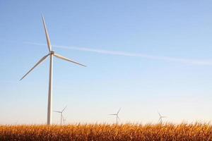 Wind Farm & Corn Crop